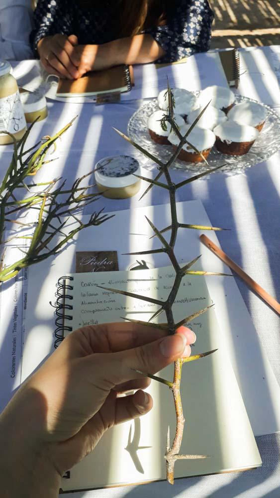 Experiencia con tintes naturales - Alpataco